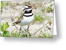 Klassic Killdeer Greeting Card by Lynda Dawson-Youngclaus