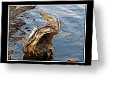 Knarled Stump In The Water Greeting Card
