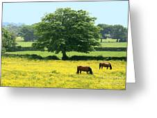 Knee High In Buttercups Greeting Card
