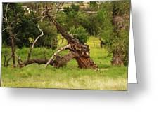 Knotty Tree Greeting Card