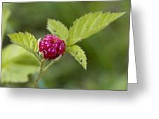 Knox Berry Farms Boysenberry Fruit Greeting Card