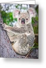 Koala  Greeting Card by Johan Larson