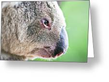 Koala Profile Portrait Greeting Card by Johan Larson