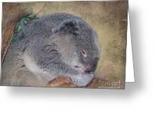 Koala Sleeping Greeting Card by Betty LaRue