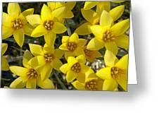 Kolpakowskis Tulip Tulipa Greeting Card
