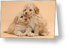 Labradoodle Puppies Greeting Card