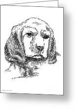Labrador-portrait-drawing Greeting Card