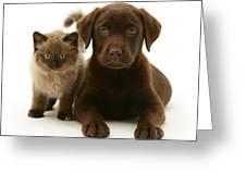 Labrador Pup And Birman-cross Kitten Greeting Card by Jane Burton
