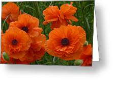 Lacy Poppies Greeting Card