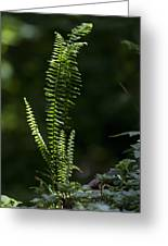 Lacy Wild Alabama Fern Greeting Card