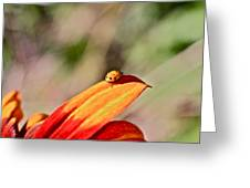 Lady Bug On A Flower Greeting Card