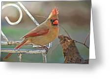 Lady Cardinal With Her Crown On Greeting Card