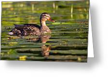 Lady Duck 1 Greeting Card