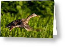 Lady Duck 2 Greeting Card