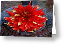 Lady In Red II Greeting Card