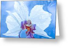Lady Orchid The Sky Beckons Greeting Card