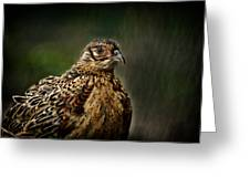 Lady Pheasant Greeting Card