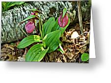 Lady Slipper I Greeting Card