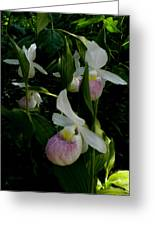 Lady Slippers Greeting Card