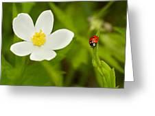 Ladybird Beetle Greeting Card