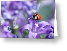 Ladybug And Bellflowers Greeting Card