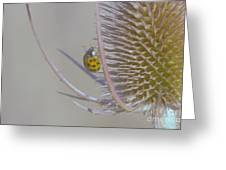 Ladybug Croosing The Prickles  Greeting Card