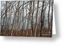 Lake Beyond The Trees Greeting Card