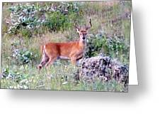 Lake Country Buck Greeting Card