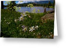 Lake Irwin Wildflowers Greeting Card