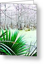 Lake Martin Swamp View Greeting Card