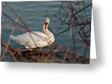 Lake Ontario Swan Greeting Card