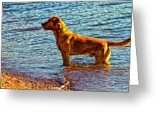 Lake Superior Puppy Greeting Card