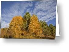 Lake Tahoe Aspen Sky Greeting Card