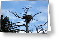 Lake Tahoe Eagle Nest Greeting Card