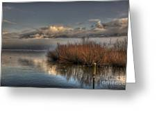 Lake With Pampas Grass Greeting Card