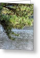 Lakeside Pines Greeting Card
