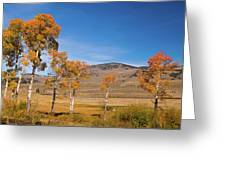 Lamar Valley Aspens Greeting Card