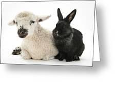 Lamb And Rabbit Greeting Card