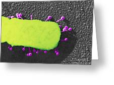 Lambda Phage On E. Coli Greeting Card