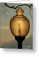 Lamp Light And Limb Greeting Card