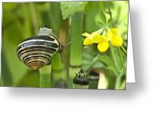 Land Snail 5698 Greeting Card