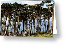 Lands End Trees Greeting Card
