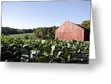 Landscape Soybean Field In Morning Sun Greeting Card