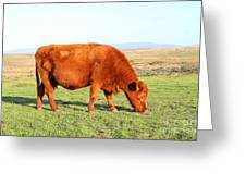 Landscape With Cow Grazing In The Field . 7d9933 Greeting Card