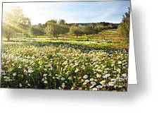 Landscape With Daisies Greeting Card