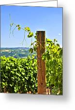 Landscape With Vineyard Greeting Card by Elena Elisseeva