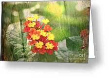Lantana Blank Greeting Card Greeting Card