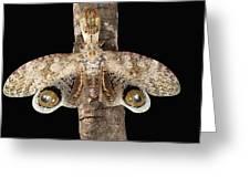 Lantern Bug Fulgora Laternaria Greeting Card