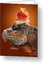 Lap Lizard Greeting Card by Jim Carrell