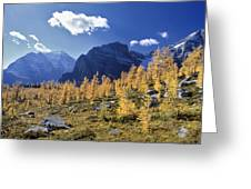 Larch Trees From The Saddleback Trail Greeting Card